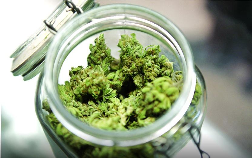 ¿Quieres un amparo para consumir mariguana? Todos los jueces estarán obligados a darte uno