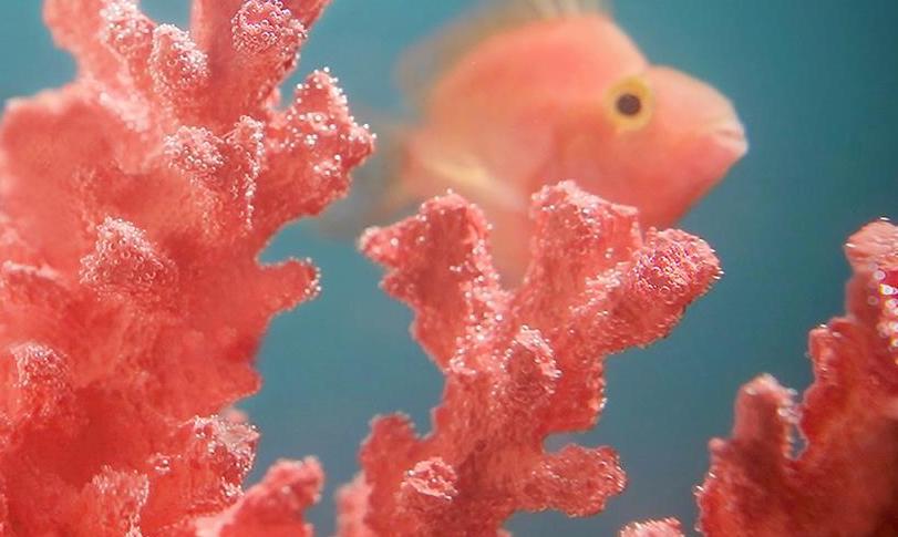 Living Coral es el color del 2019 según Pantone. Te decimos dónde usarlo