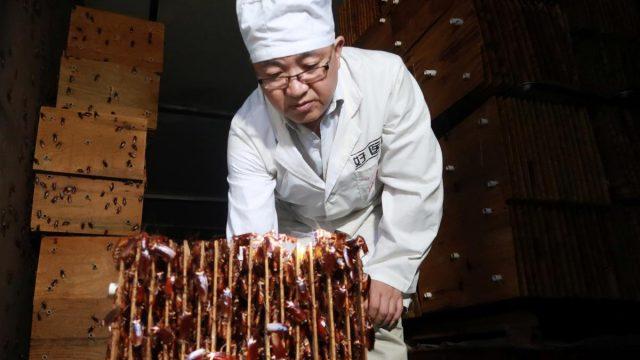 Millones de cucarachas usadas para desperdicio de alimentos en China