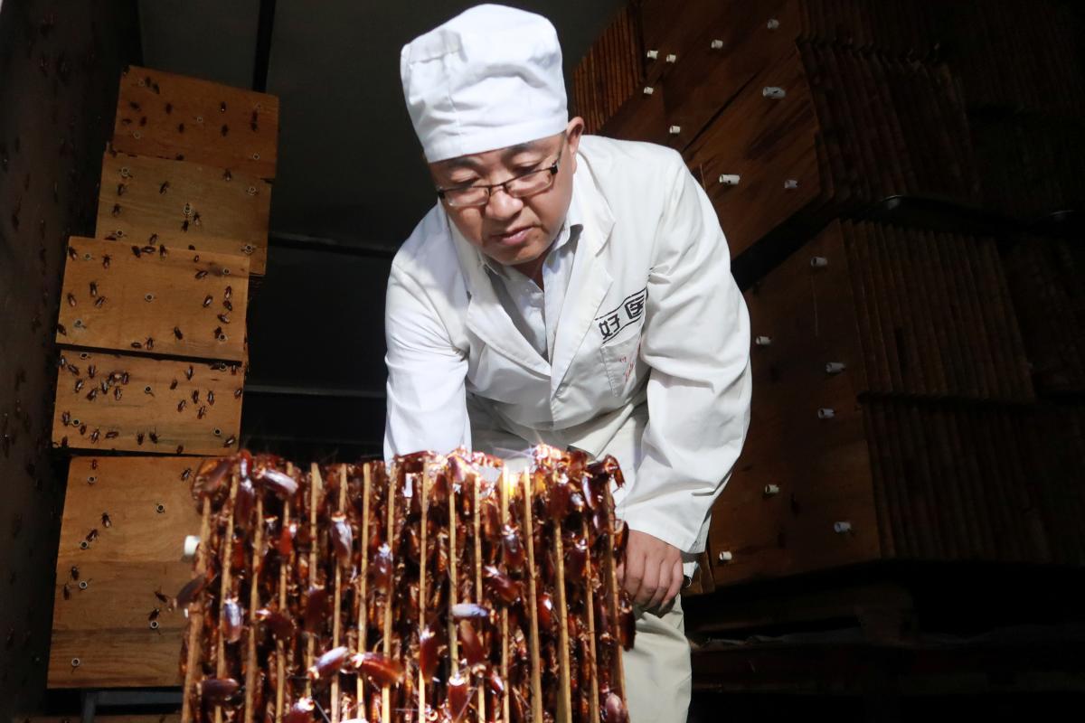 En China ya encontraron la forma de darle 'trabajo' a millones de cucarachas