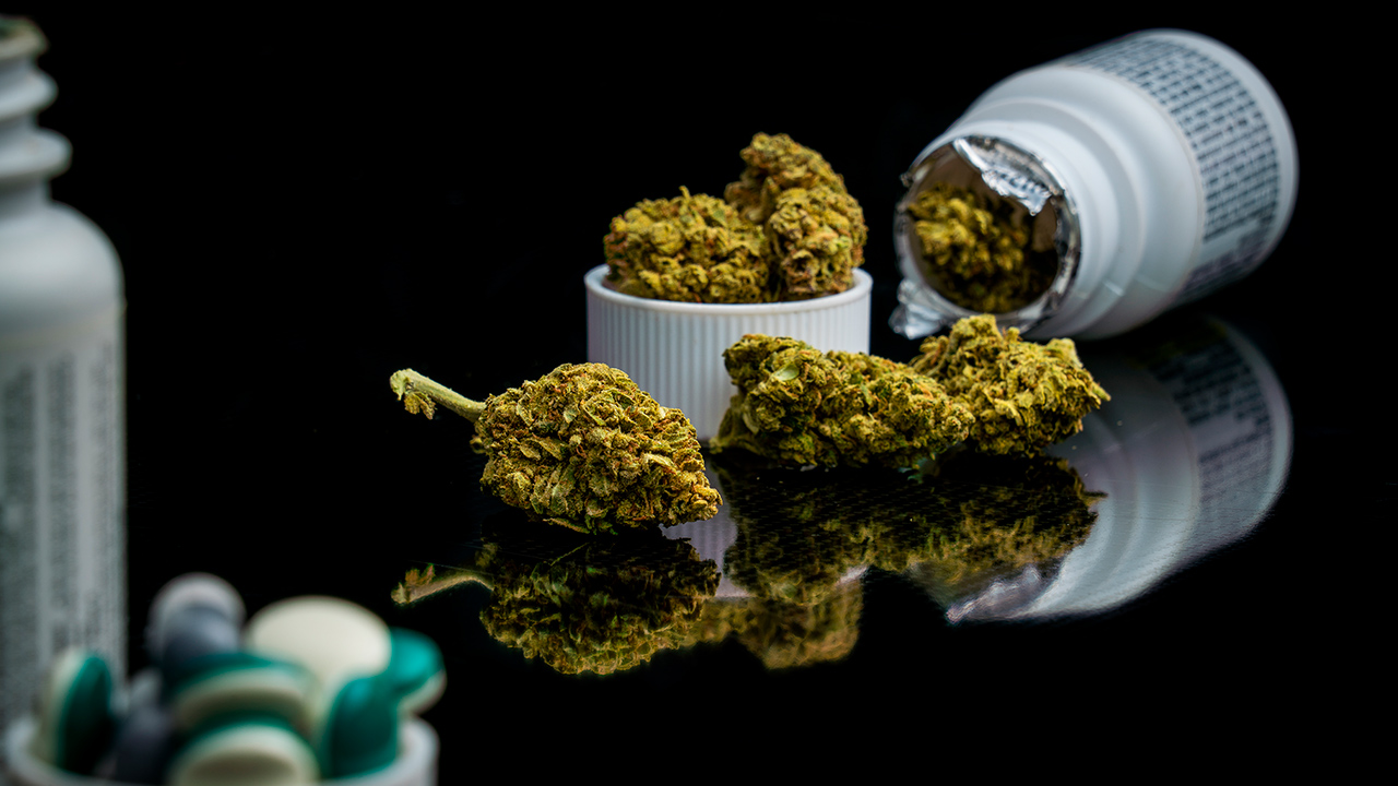 Canncura alista investigación en cannabis mientras la ley libera su entrada