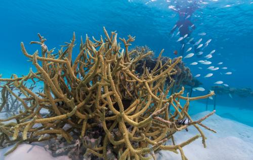 ¿Te gustaría adoptar un coral? Este resort en Maldivas lo hace posible