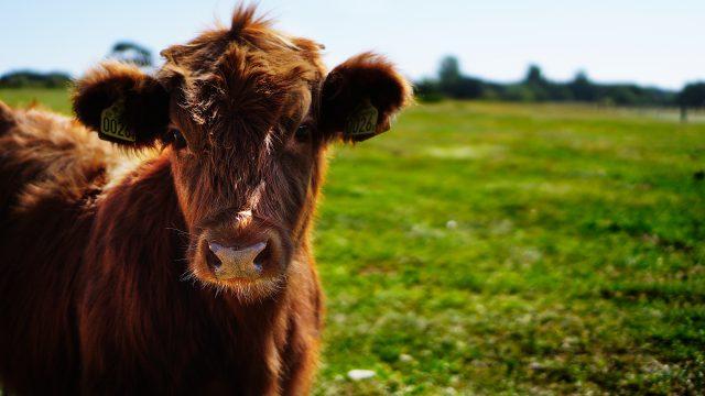 De proteina listado mexico alimentos vaca sin de