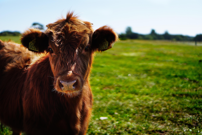 Estos millennials crearon 'lácteos de vaca' artificial (pero con buen sabor)