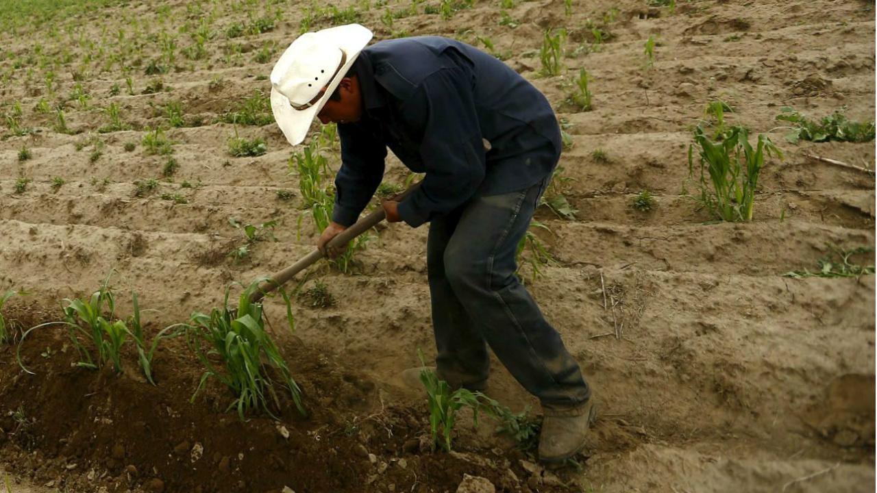 Negocio incluyente para pequeños productores