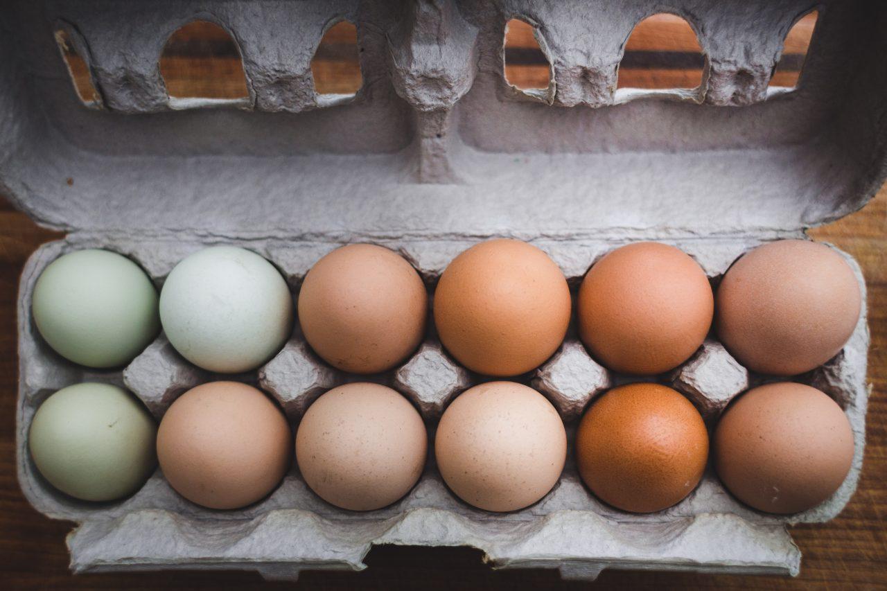 Farmacéuticas podrían tener un nuevo competidor: las gallinas
