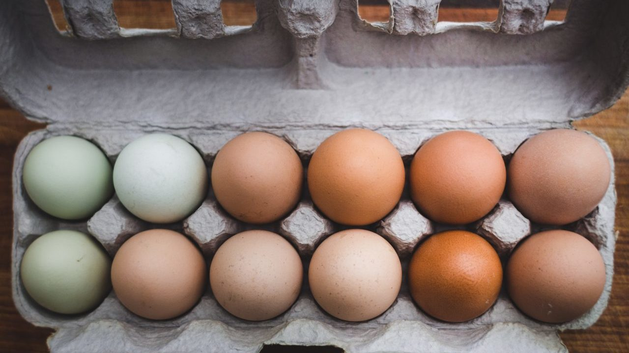 Walmart, Soriana y Oxxo reprueban en ranking sobre huevo de gallina libre de jaula