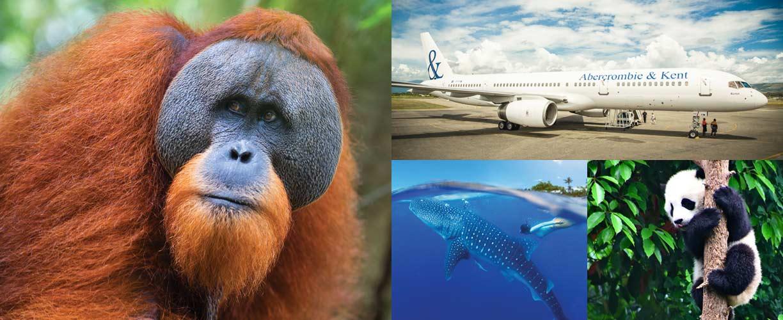 'Safari en el cielo': una aventura sin límites geográficos