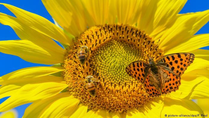 Catastrófico: estudio muestra fuerte declive en la población de insectos