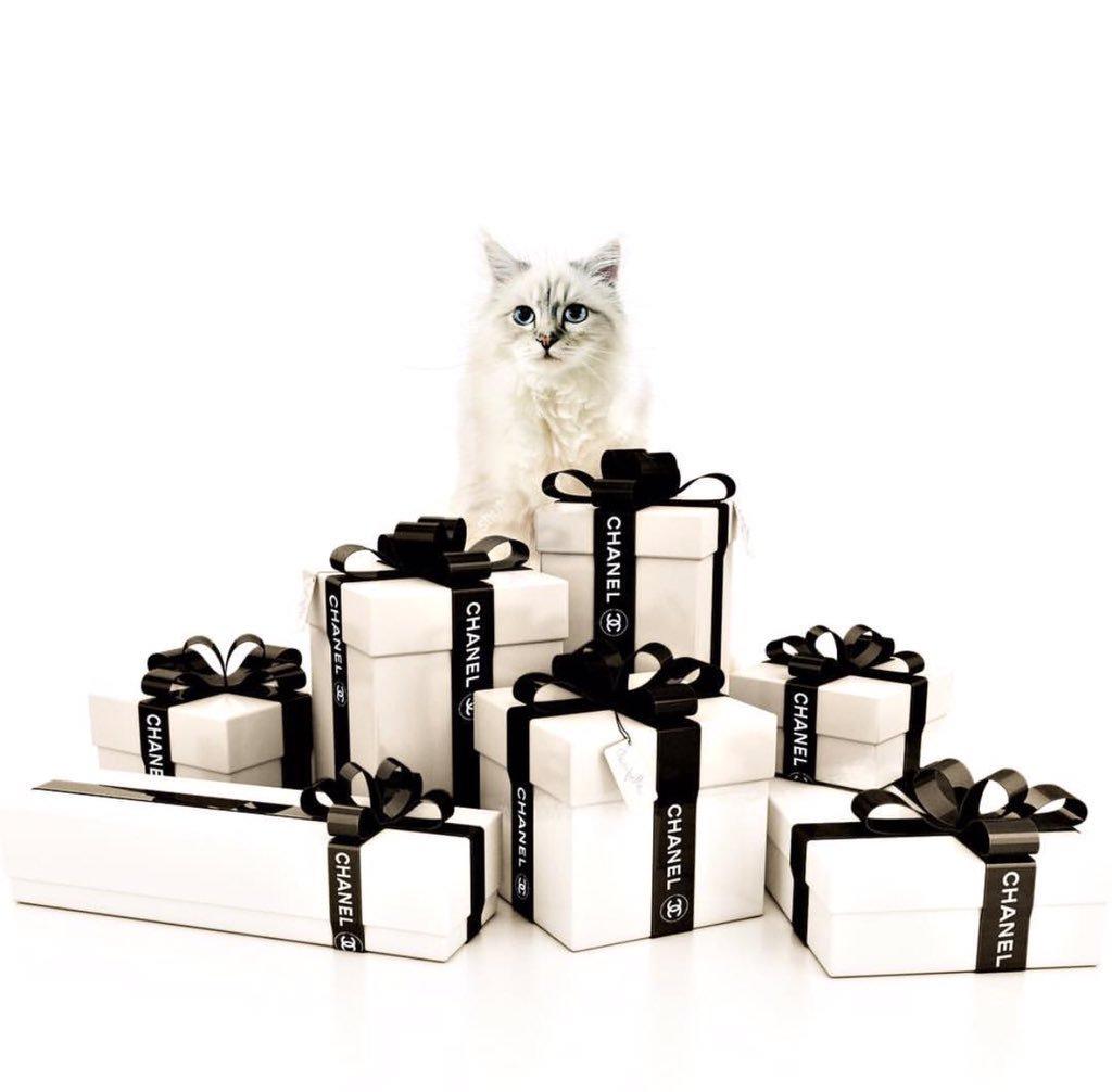 Choupette, la mascota influencer de Karl Lagerfeld genera ingresos millonarios
