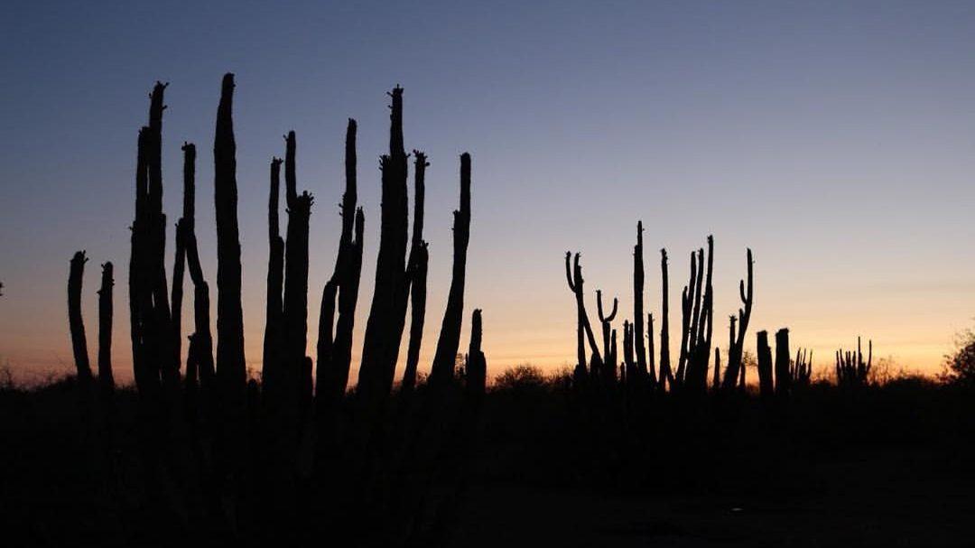 Suaqui, el destilado que captura el sabor del desierto