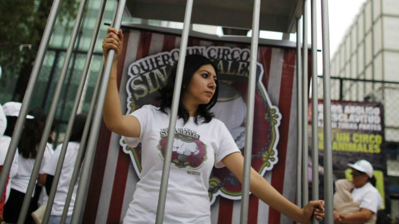 Piden echar atrás iniciativa que regresará animales a los circos