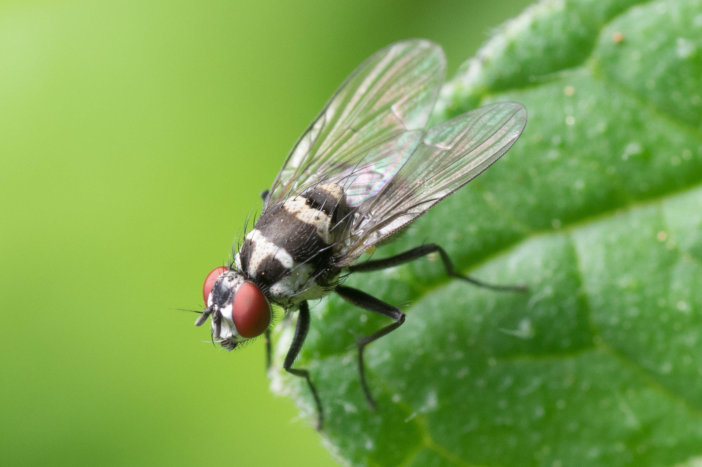 Las moscas mantienen el equilibrio ecológico del planeta