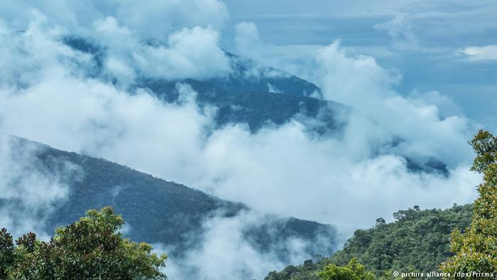 Deforestación y degradación, las mayores amenazas de los bosques en América Latina