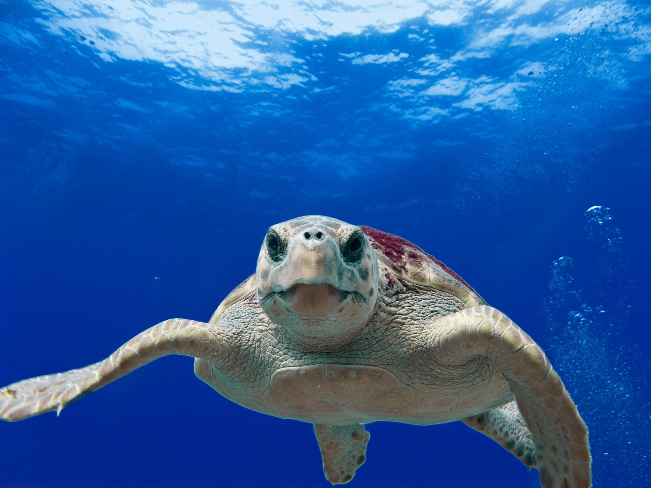 Encuentran 30 tortugas muertas en playas de Guerrero