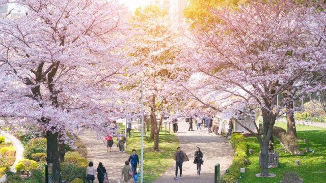 Japón Hanami