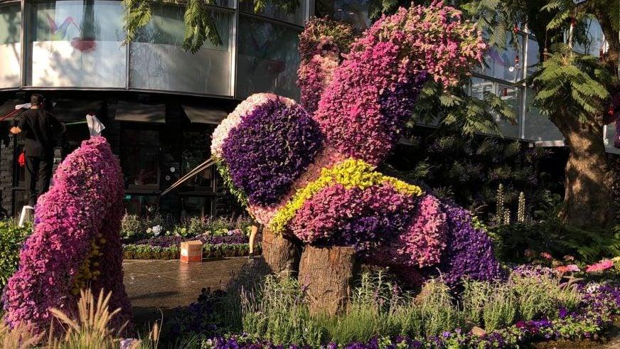 Polanco en flores