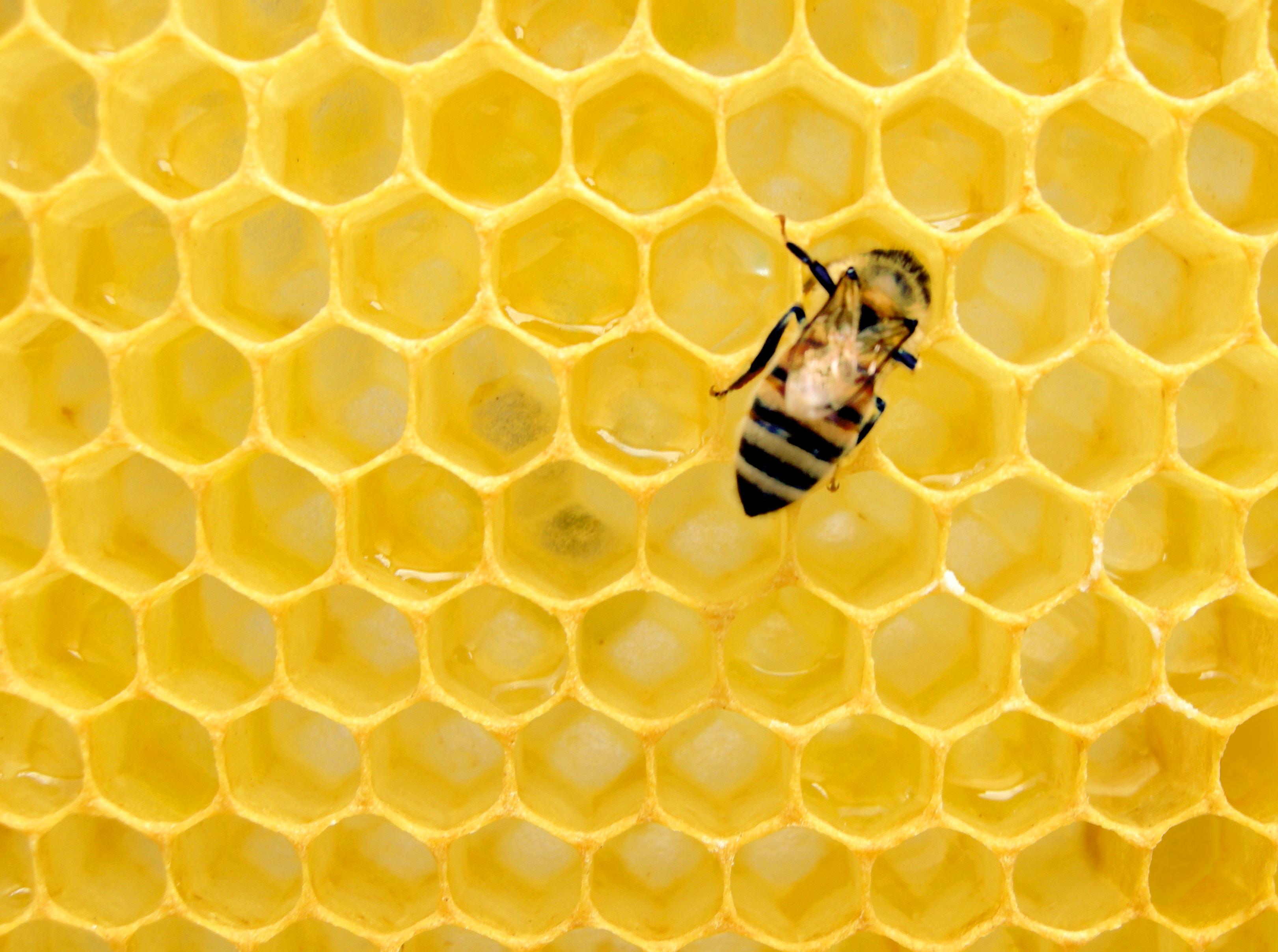 ¿A quién le importa la pérdida de abejas en América Latina?