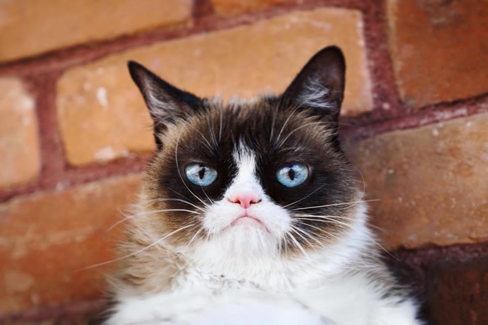 Muere Grumpy Cat, la mascota influencer más famosa de la lista Forbes