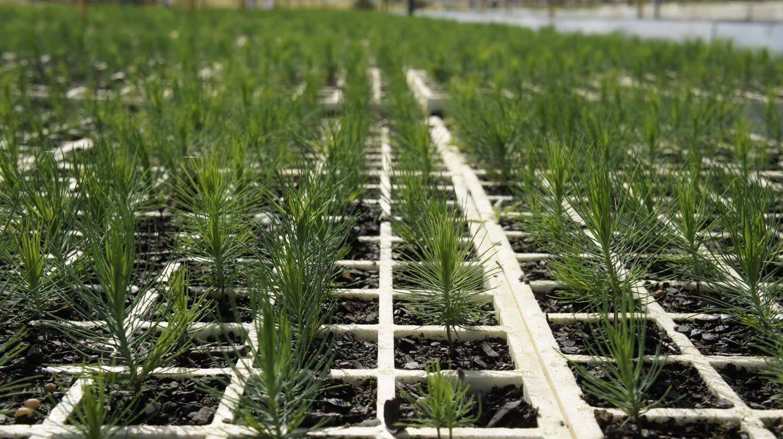 CDMX sembrará 10 millones de árboles para disminuir contingencias