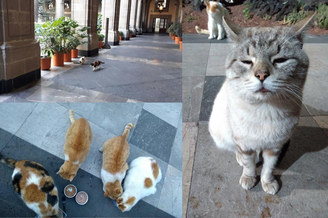 ¿Gobierno de AMLO busca expulsar a estos gatitos de Palacio Nacional?