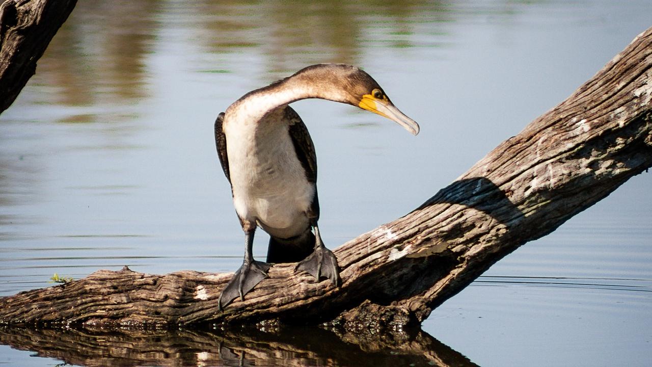 Un millón de aves mueren cada año por el plástico: WWF México