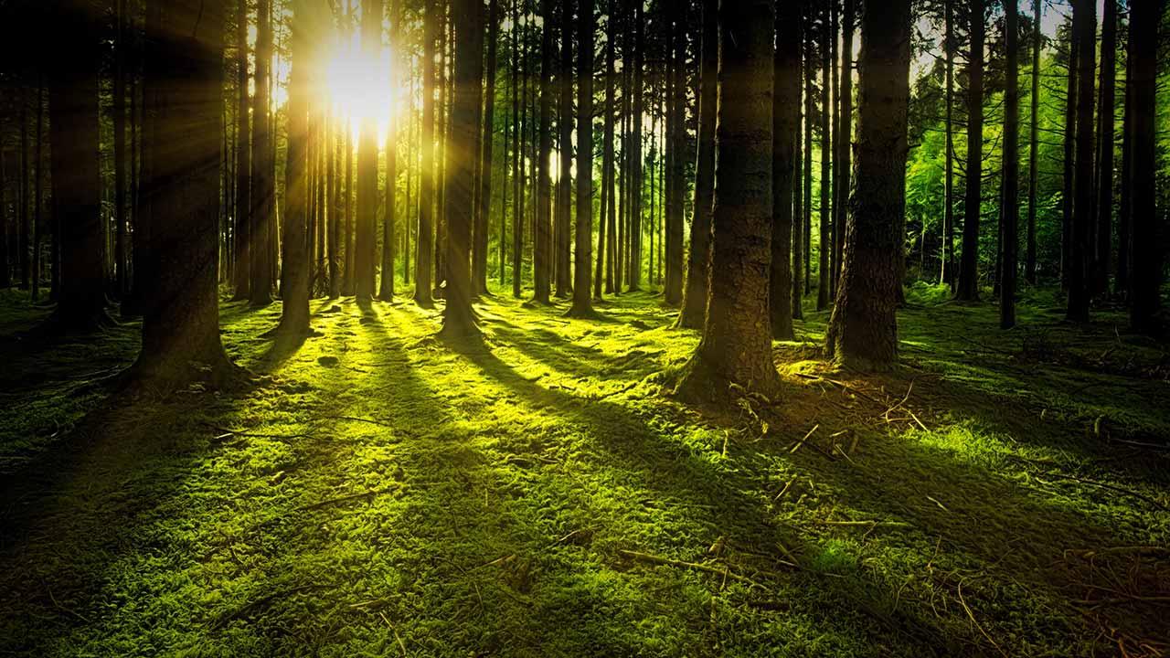 El nuevo sistema financiero digital y la reforestación