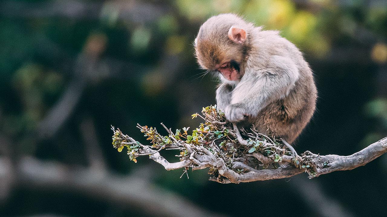 La biodiversidad se halla al borde de la extinción