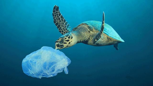 Tortuga marina contaminación mar