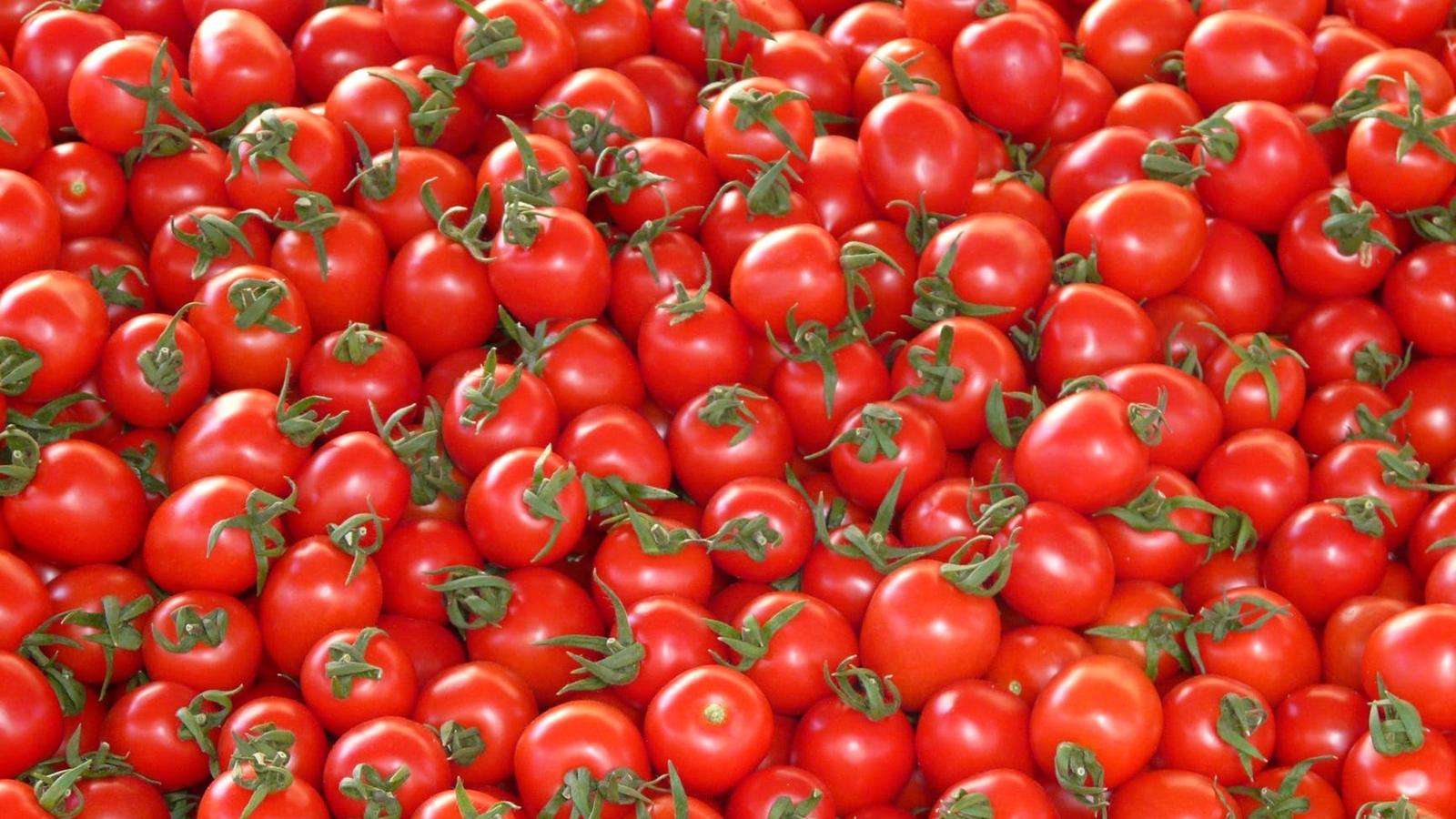 Esperarán investigación de EU para resolver tema de tomate