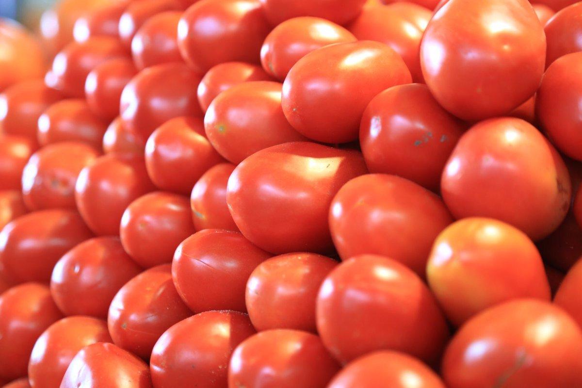 México y EU definen la situación de los aranceles al tomate mexicano