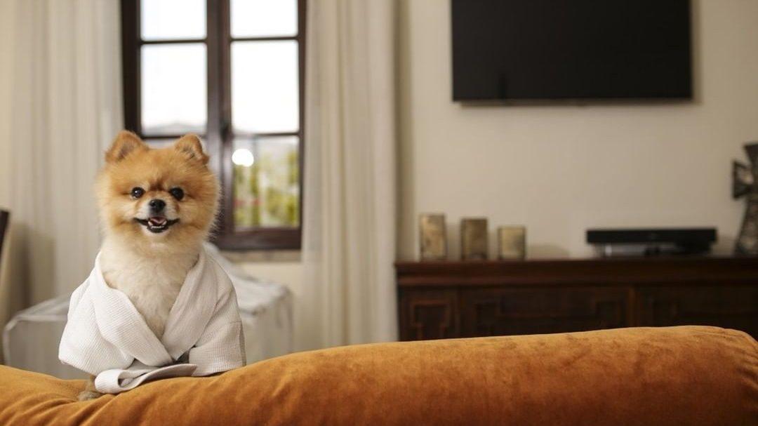 Top 5: Hoteles ideales para vacacionar con tu mascota