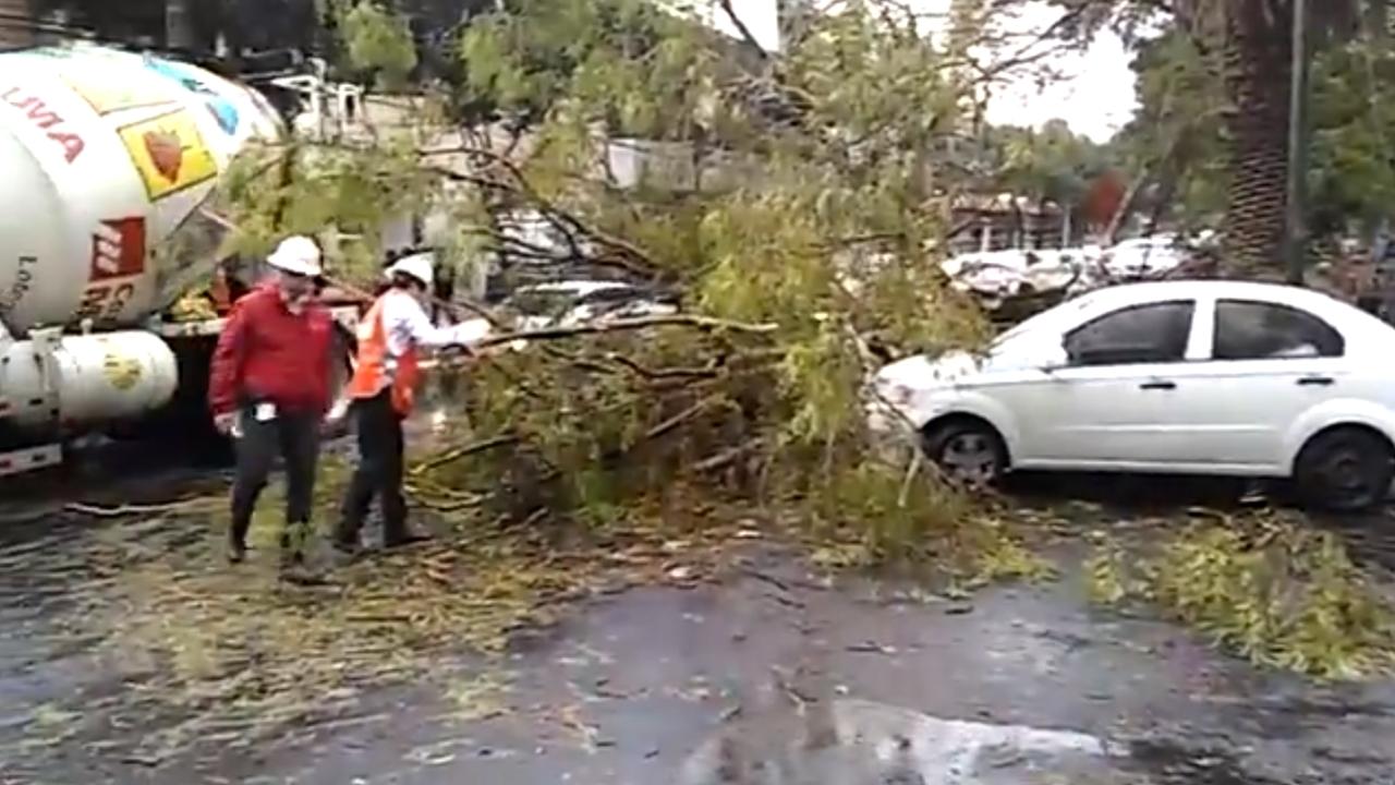 Tormenta tira árboles en al menos 9 alcaldías de CDMX