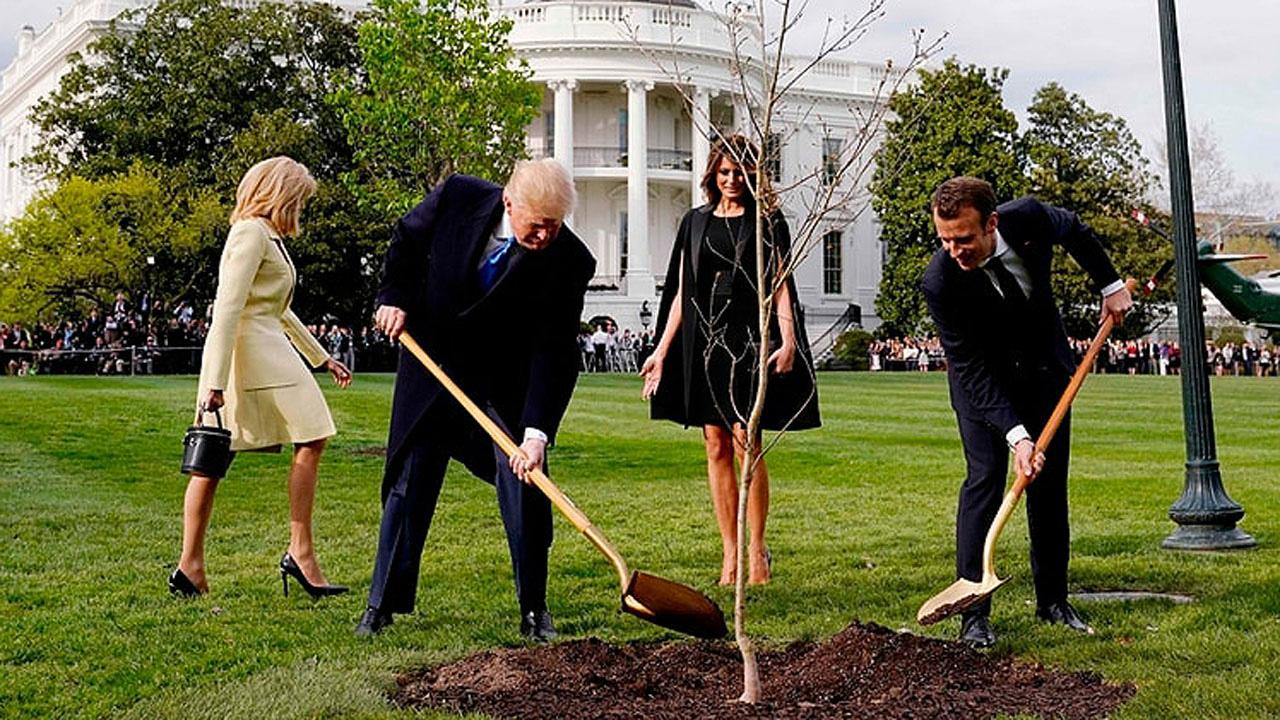 Muere el árbol de amistad simbólico de Trump y Macron: una 'esperada' coincidencia