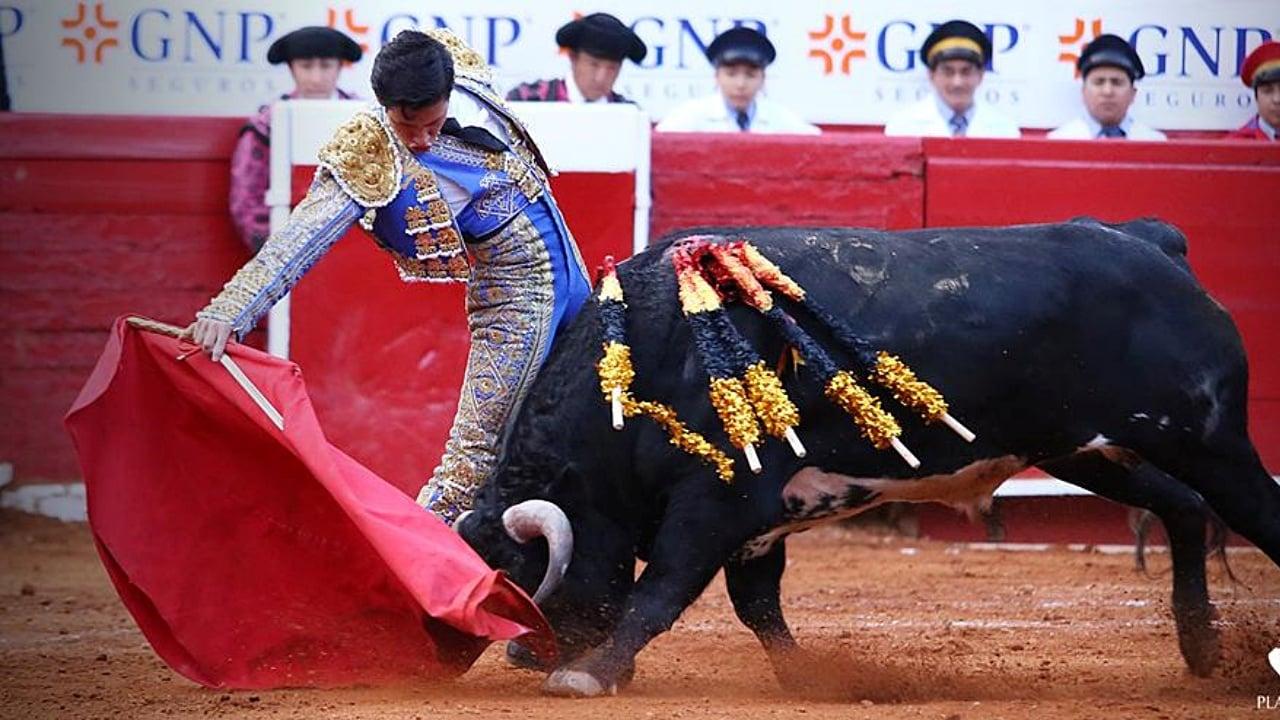 Quintana Roo prohíbe las corridas de toros y peleas de gallos