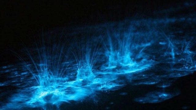 Dónde ver el fenómeno de bioluminiscencia de Holbox
