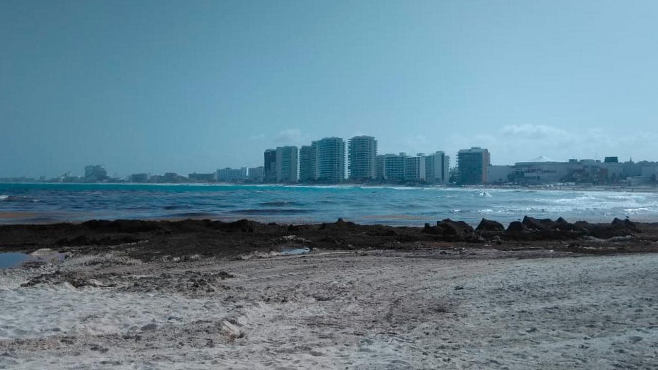 Expertos brasileños se unen para combatir sargazo en playas mexicanas