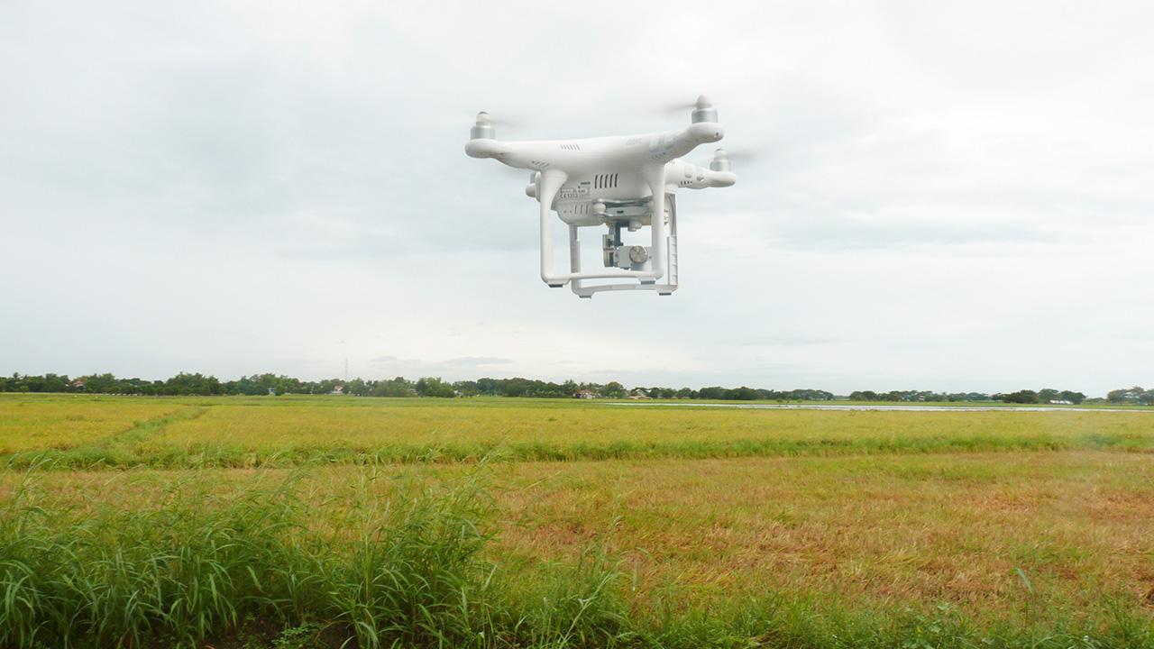 Inteligencia Artificial, robots y biotecnología, así es el futuro de la agricultura
