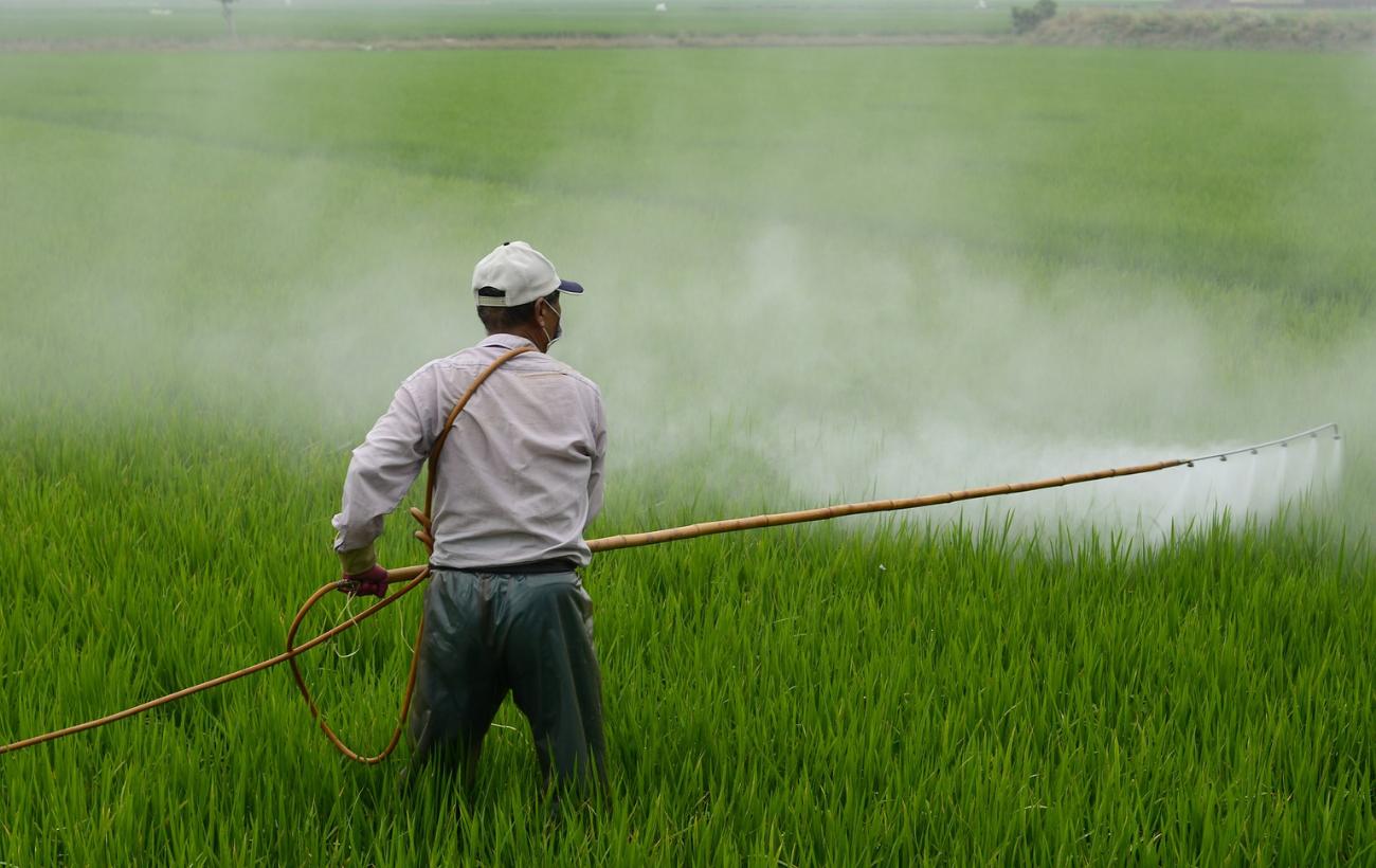 Rechazan prohibición de pesticida que causa daño cerebral en bebés