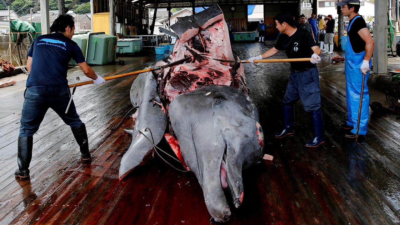 Japón celebra la primera caza de ballenas de la temporada