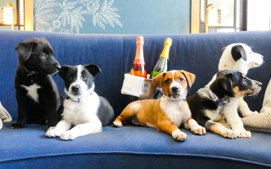 Hospedaje con cachorros incluidos, la nueva amenidad de lujo