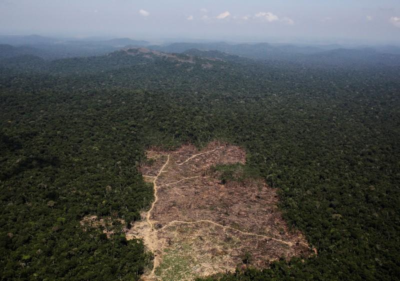 Deforestación del Amazonas supera el 88% en primer junio de Bolsonaro