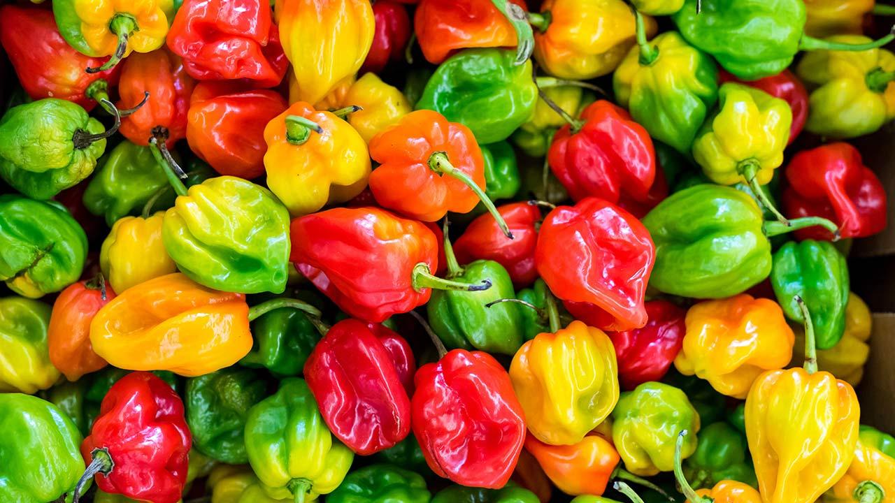 Científicos mexicanos logran patentar nueva variedad de chile habanero