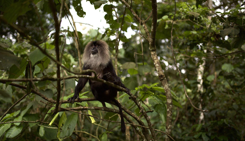 Este documental de naturaleza es el más visto en 2019