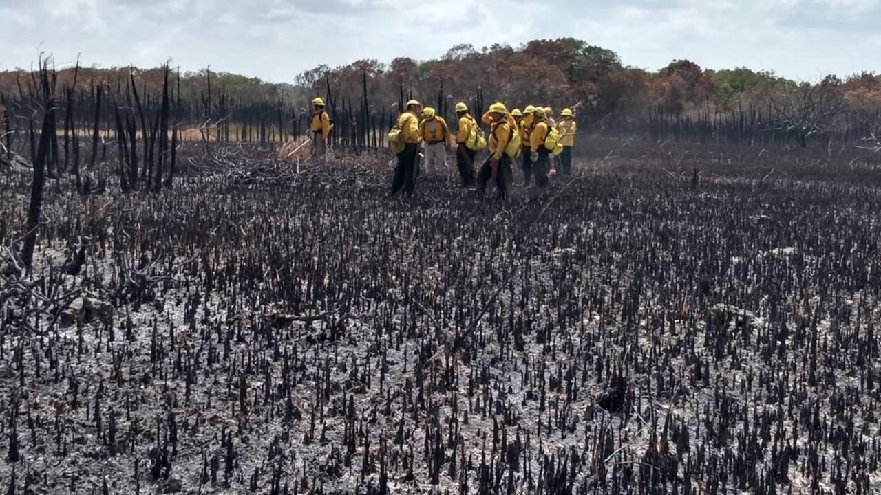 Una selva no la volvemos a ver igual en 200 años: director de la reserva de Sian Ka'an