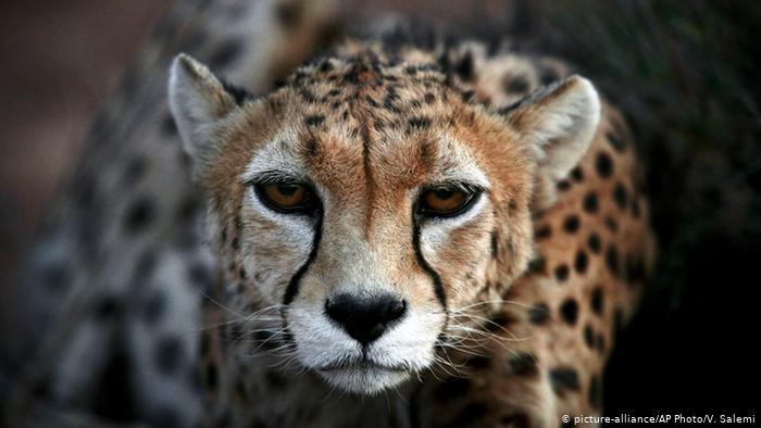 CITES 18 | Freno al contrabando de animales en peligro
