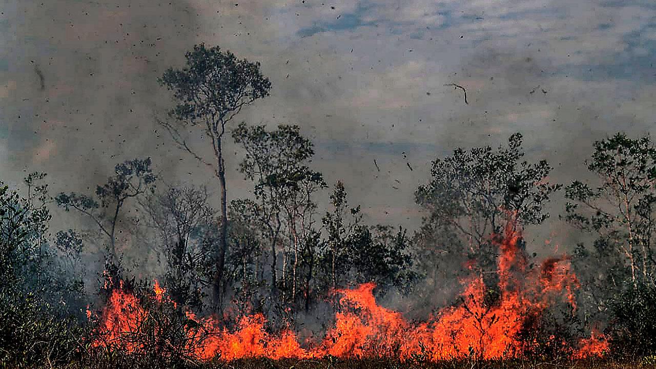 Greenpeace pide a Bolsonaro actuar rápido o Amazonas se reducirá a cenizas