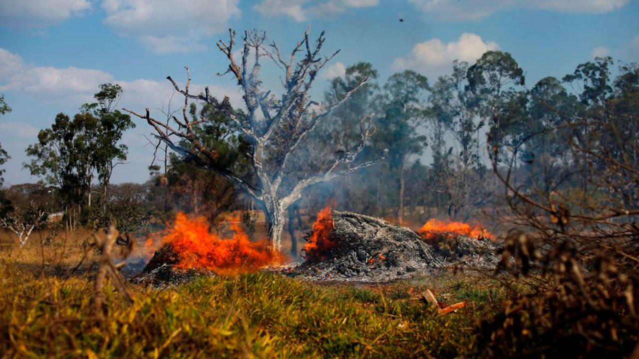 Deforestación en Amazonas brasileño se disparó 85% en 2019