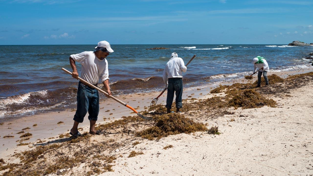 Trabajadores limpiando la playa pública de Tulum, México. Agosto 2019. Foto: Angélica Escobar/Forbes México.