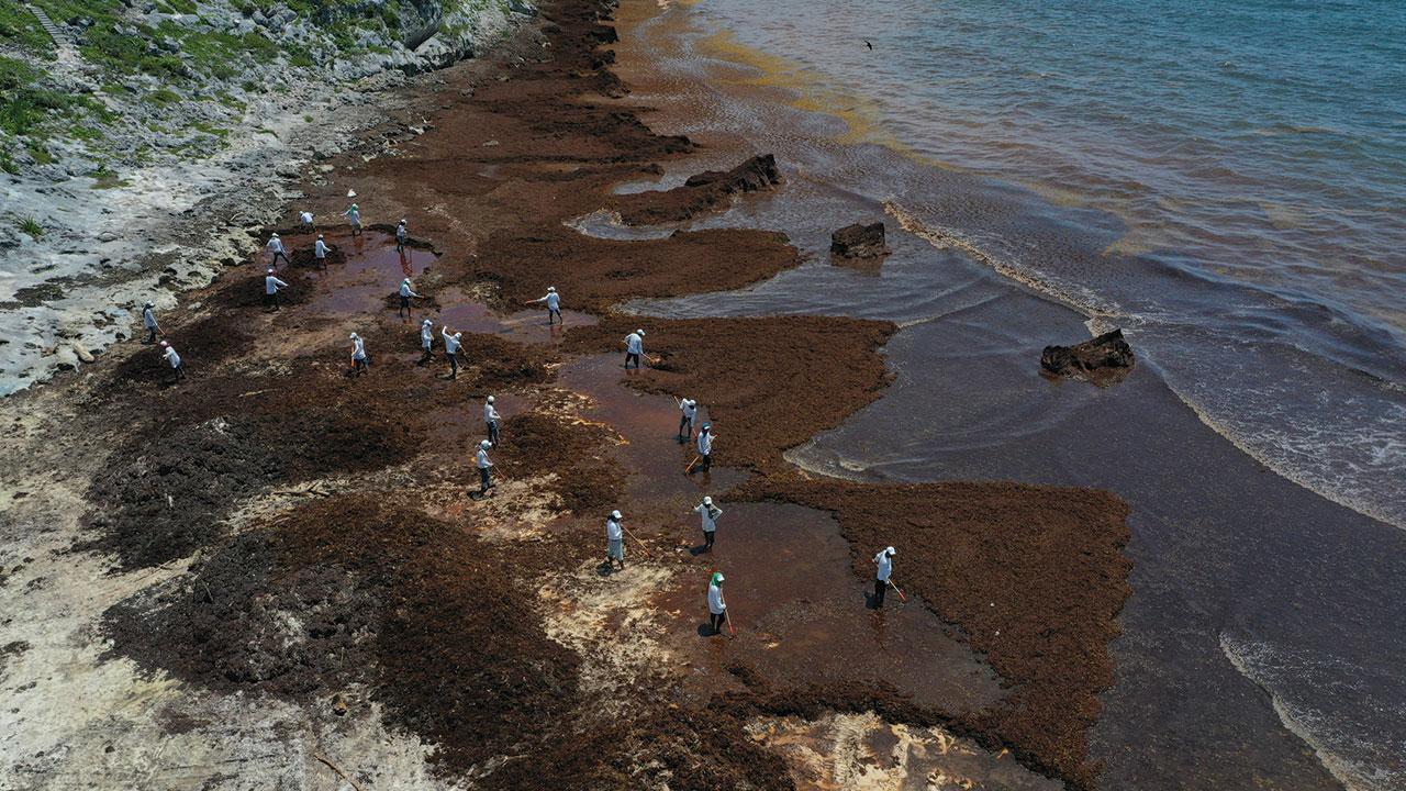 El legado del sargazo: menos turistas y más golpes al medioambiente